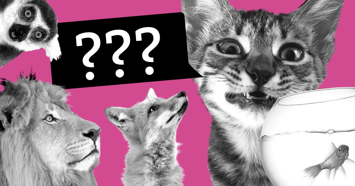 ТЕСТ: Безмолвная рыбка или заводной кролик? Узнайте, кто вы в понедельник!