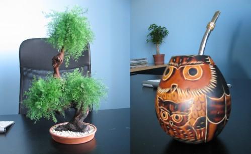 растение, которое питается пылью, водоросли на столе