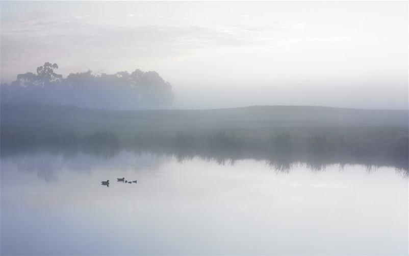 Ducks on a Misty Pond
