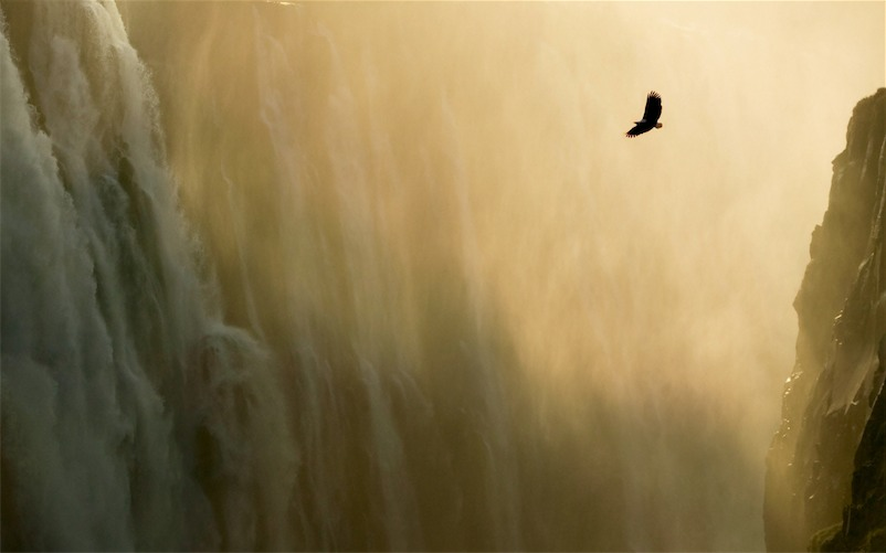 Eagle & Waterfall