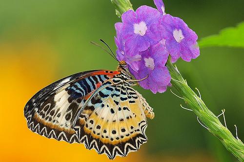 бабочки, макросъемка