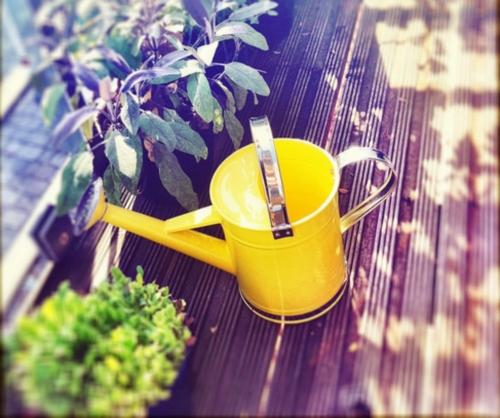 Зелень на подоконнике: как вырастить свой маленький сад