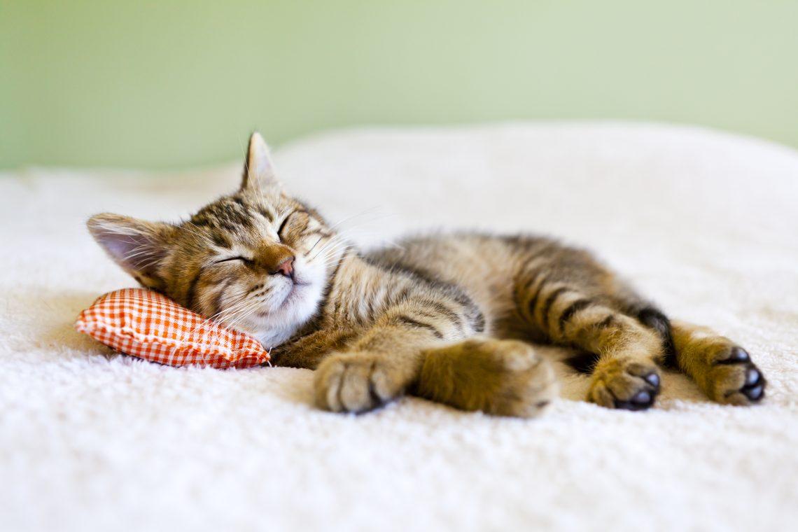 12 упражнений йоги для крепкого и здорового сна
