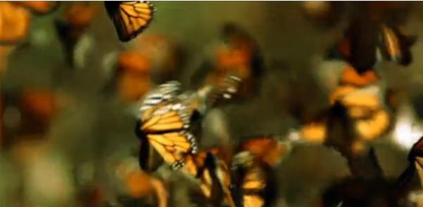 ВИДЕО: Луи Шварцберг о природе, красоте и благодарности