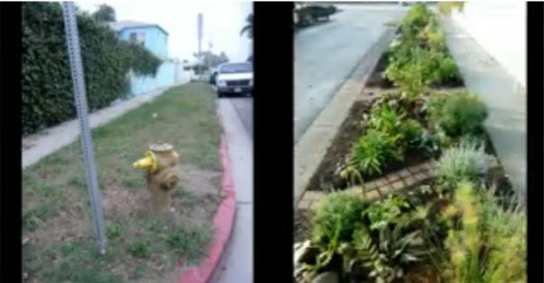 ВИДЕО: Рон Финли и его партизанское садоводство