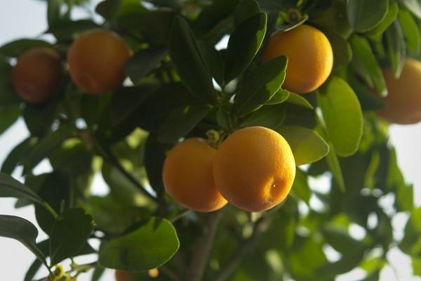 РЕЦЕПТЫ: Освежающий кофейно-апельсиновый Бамбл