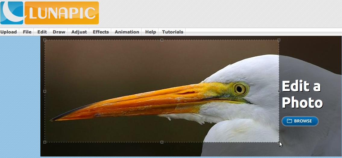 Lunapic — быстрый онлайн-редактор для ваших фотоснимков
