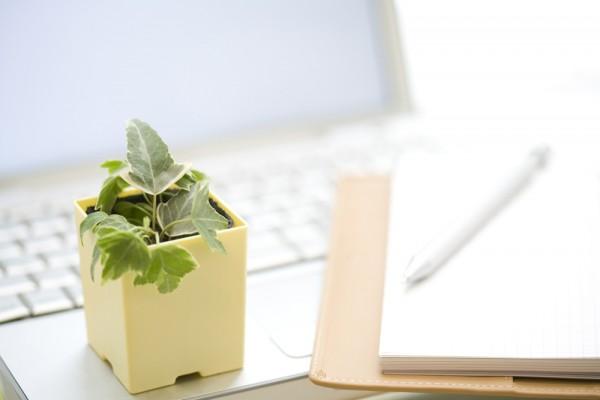 Почему комнатные растения на рабочих столах делают нас более продуктивными