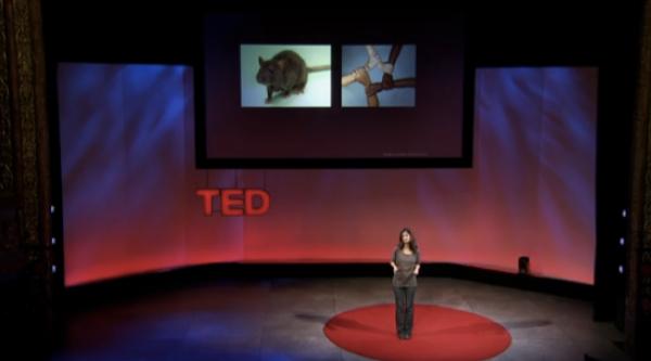 ВИДЕО: Индивидуальная тканевая медицина