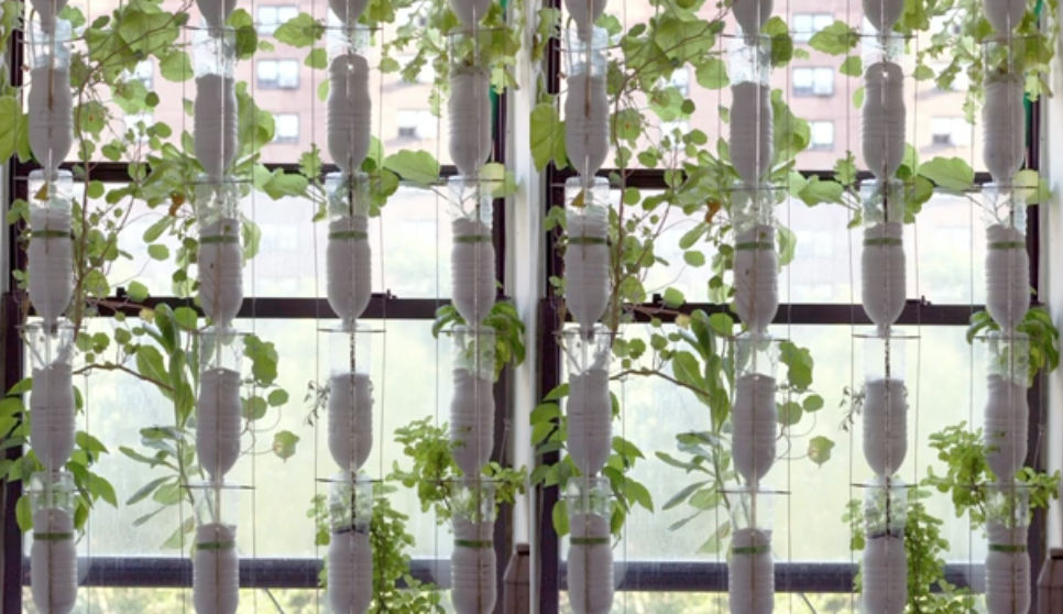 ВИДЕО: Огород в домашних условиях 2.0