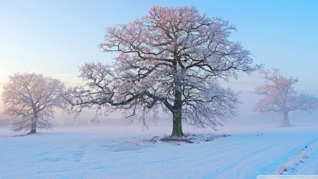 winter_morning_3-wallpaper-2048x1152