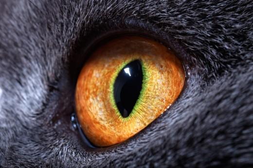 40 фактов о наших любимых глазах, которые мы так не бережём