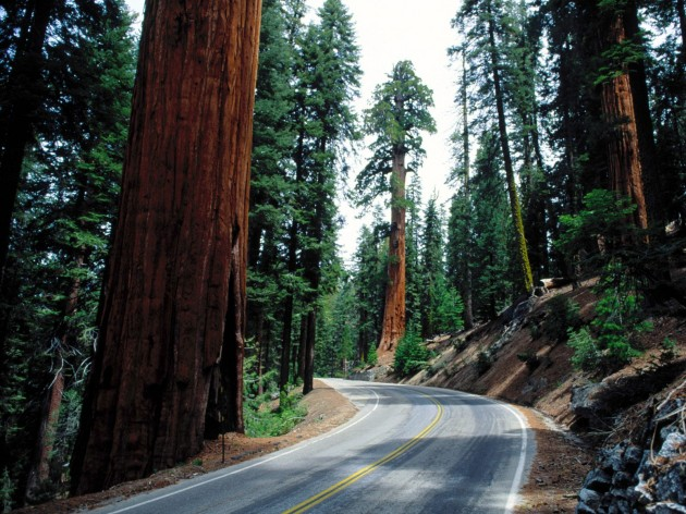 Redwood_Road_Sequoia_National_Park