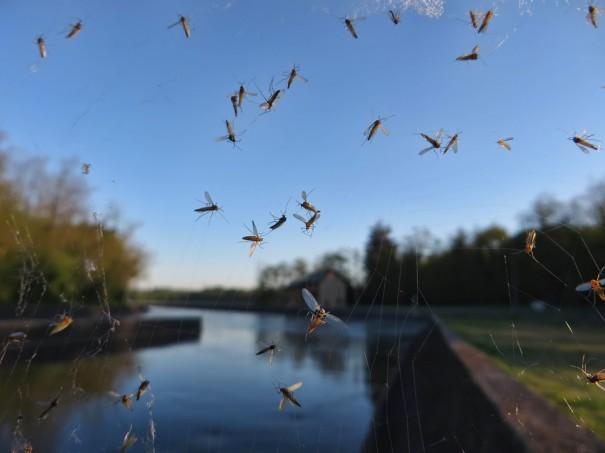 Делаем ловушку для комаров своими руками