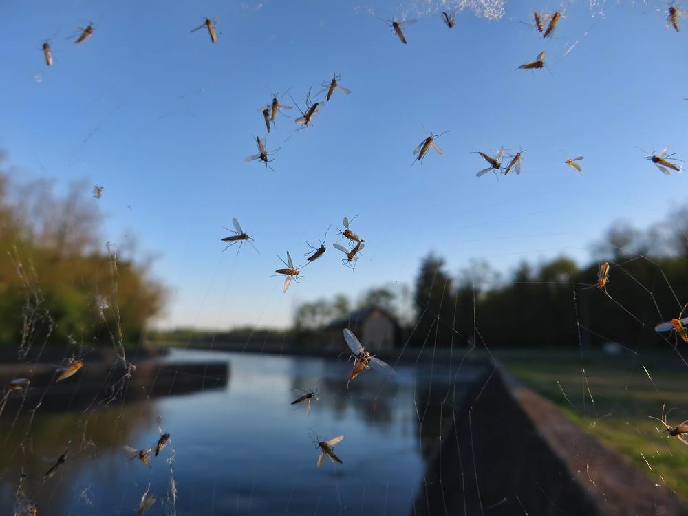 Как самостоятельно сделать безвредную ловушку для комаров