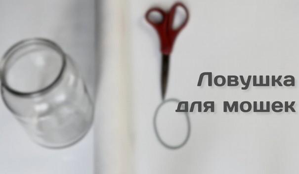 ВИДЕО: Самый простой способ избавиться от мошек дома