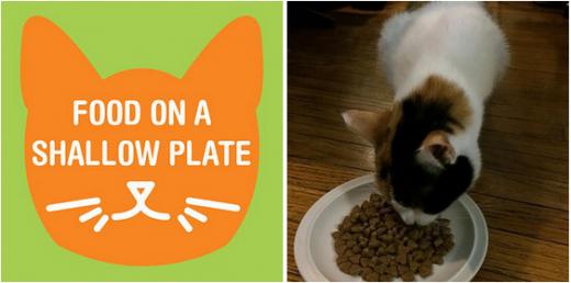 Еда для котов