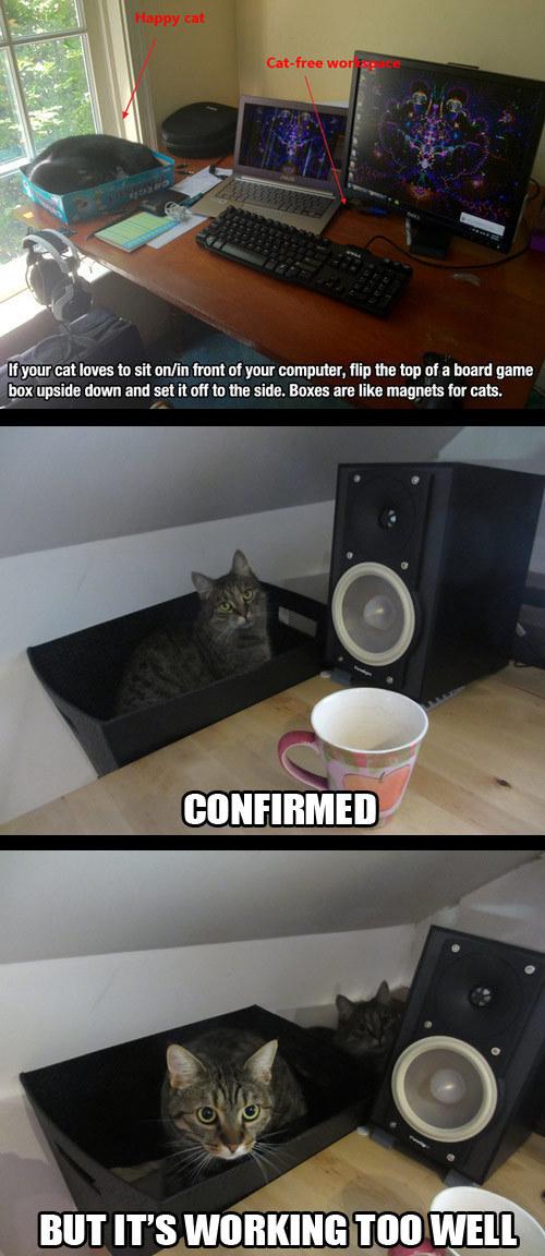 Коты На рабочем столе