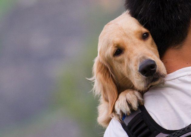 15 вещей, которым люди могут поучиться у собак