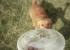 ВИДЕО: 7простых лайфхаков длявладельцев собак