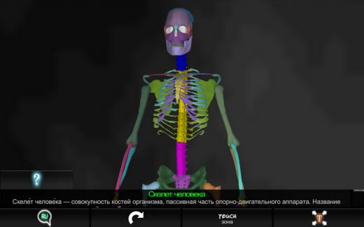 «Кости человека 3D»