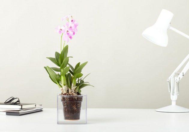 Растения в Bosske Cube можно поливать раз в месяц