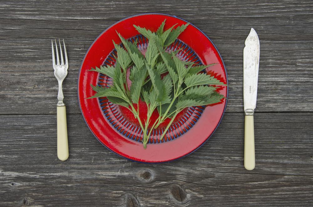 Полезные свойства крапивы для здоровья