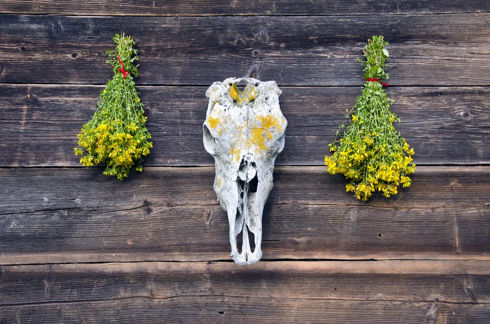Полезные свойства зверобоя для здоровья