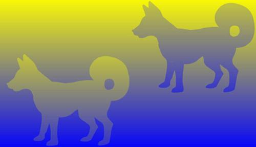 Собаки идентичны