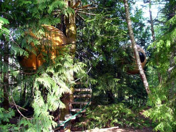Домик на дереве, который можно забронировать