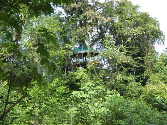 Дом на дереве, в котором вы можете побывать