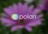 Polarr — онлайн-редактор снимков со множеством фильтров