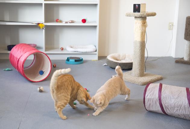 Игра с кошками