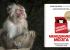РЕЦЕНЗИЯ: «Парадокс Шимпанзе. Менеджмент мозга», Стив Питерс