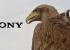 ВИДЕО: Невероятные ролики с Sony Action Camera