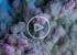 ВИДЕО: Как победить плесень в доме