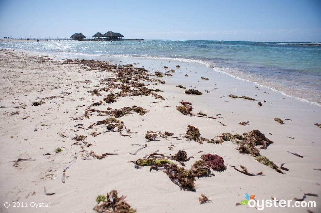 Фото: oyster.com