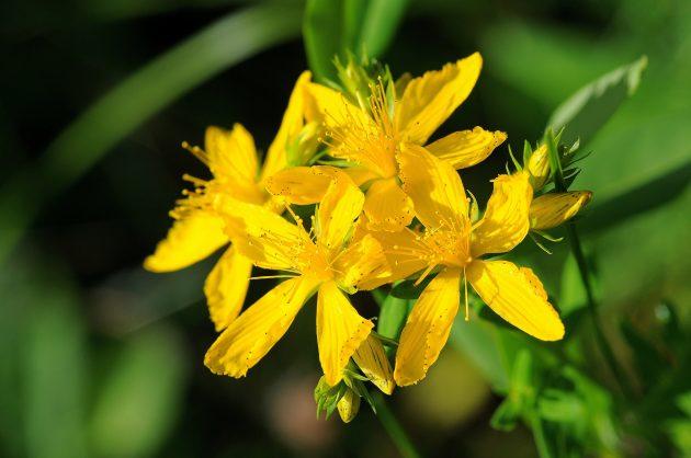 Как подготовиться к осени и не впасть в депрессию: запаситесь лечебными травами