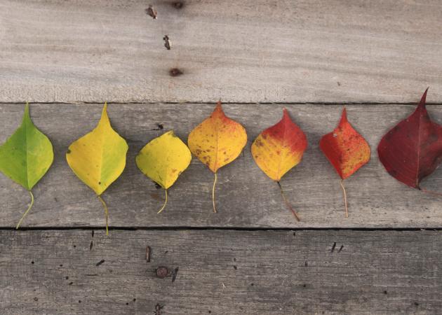 Как подготовиться к осени и не впасть в депрессию
