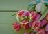 ВИДЕО: Как продлить жизнь свежих цветов