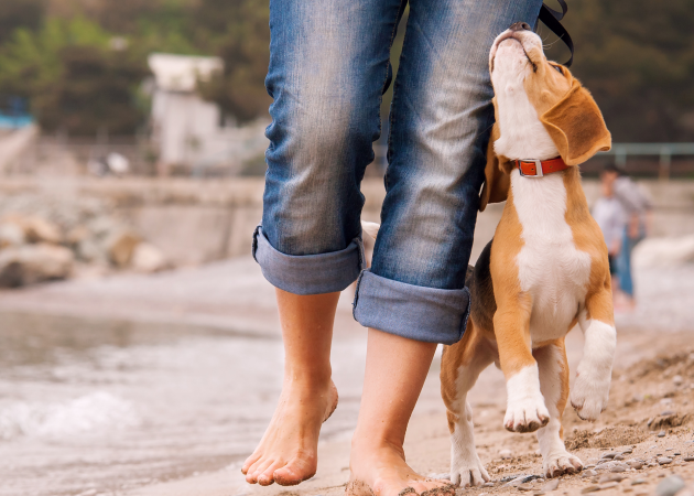 ИНФОГРАФИКА: Как научиться понимать собак