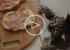 ВИДЕО: Чем кормить кошек