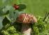 Как правильно искать грибы