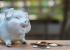 В чём разница между минимализмом и экономией