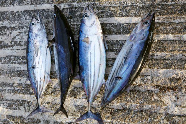 В океане много еды