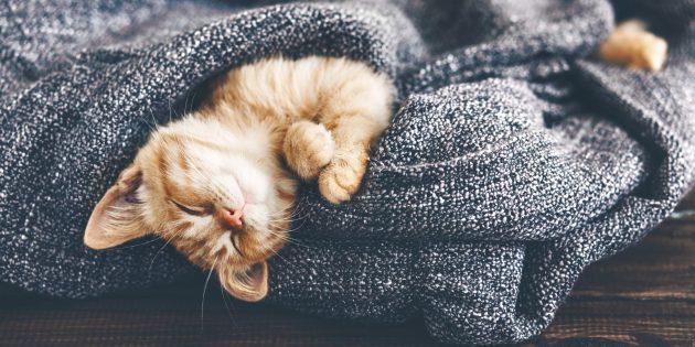 Сон: почему он так важен, сколько нужно спать и как правильно это делать