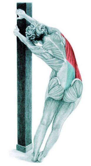 Анатомия стретчинга: растяжка широчайших мышц у стены