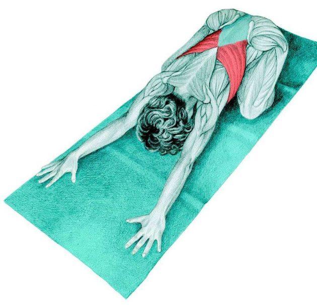 Анатомия стретчинга: поза ребёнка