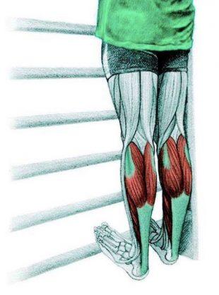 Анатомия стретчинга: растяжка икроножных мышц