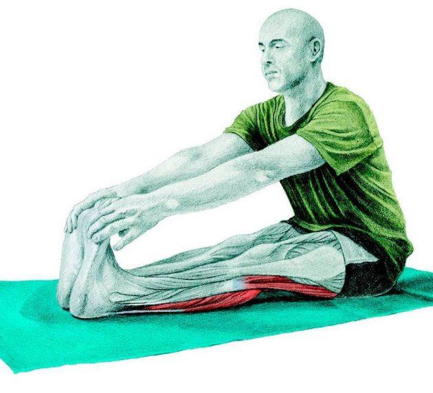 Анатомия стретчинга: продольная складка